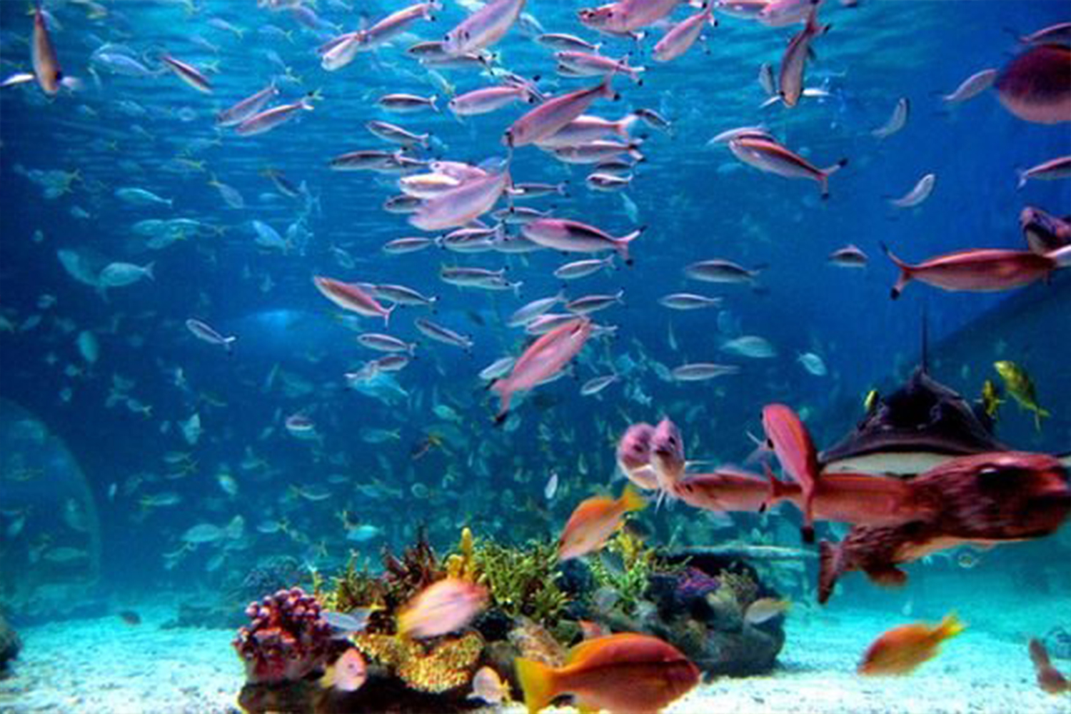 All kinds of fish dating site 2