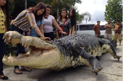 "Visits: The Crocodile Park's Newest Attraction ""Longlong ..."