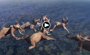 This is the First Time in Your Life You Can See Elephants Sky Diving. Incredible!