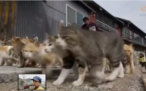 A Small Island In Japan Dominated By Cats Impossible!
