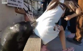 Watch: This Young Girl Pulled by a Sea Lion Went Viral Online