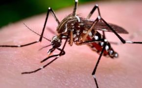 WATCH: What to do if you have dengue?