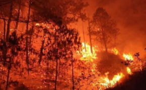 1,000 Hectares of Forest Destroyed in Benguet Forest Fire
