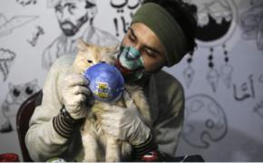 Pet Cat Tested Positive with the Novel Coronavirus in Belgium